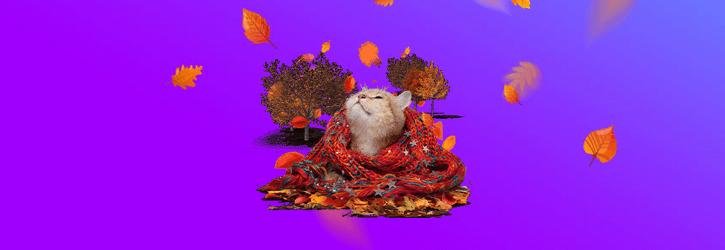 supercasino cozy cat kampaania