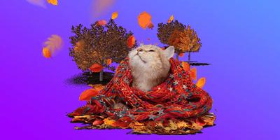 supercasino cozy cat